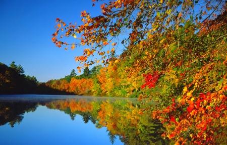 Výsledek obrázku pro autumn nature scenes