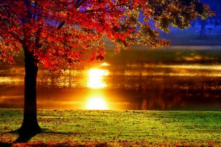 фото закат в лесу