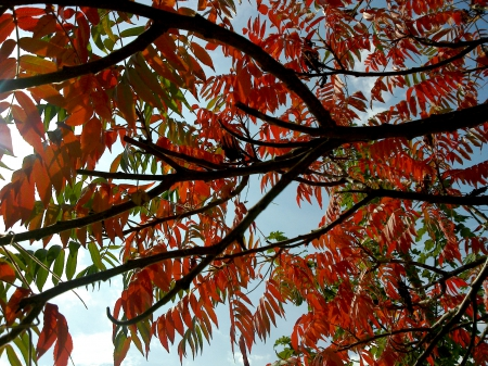 red leaves - branches, leaves, sunlight, tree