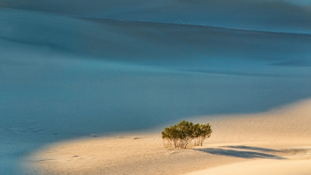 lone bush in sand dunes - desert, shadow, bush, dunes