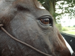Horse Head Close up Photography