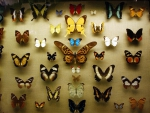 Nice Collection of Butterflies