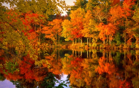 Fall Foliage Lakes Nature Background Wallpapers On Desktop Nexus
