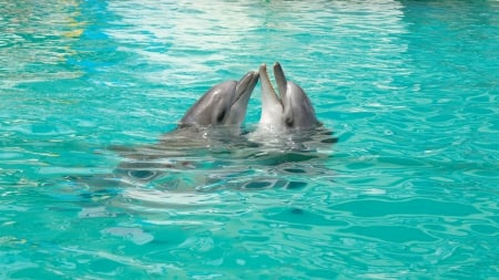 *** Dolphins *** - dolphin, dolphins, animals, animal