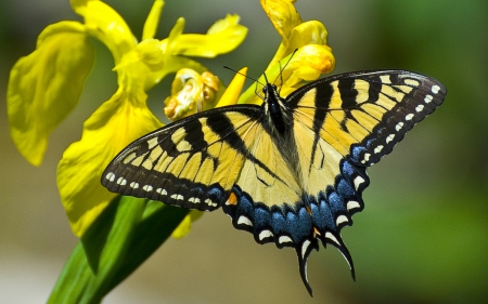 Gorgeous Butterfly - butterfly, bright, flowers, yellow, beautiful, blue