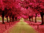 PINK FALL ROAD