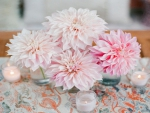 ❀⚘Soft Pink Dahlias⚘❀