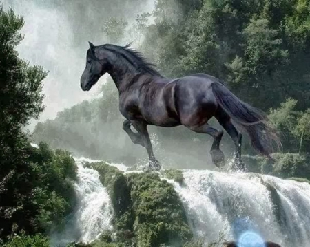 black horse & waterfall - waterfall, nature, animals, horses