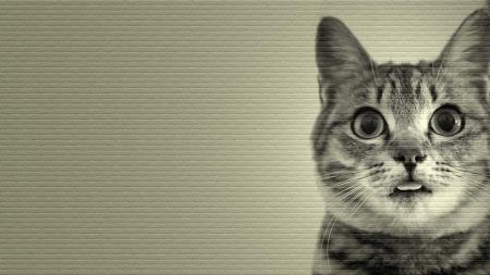 Heart Cat Cats Animals Background Wallpapers On Desktop Nexus