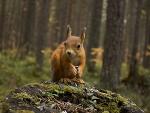 *** Squirrel in forest ***