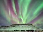 magnificent aurora borealis over a herd of horses