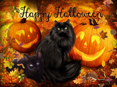 cute halloween cats�� �� cats amp animals background