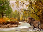 lion and nature,autumn