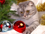 *** Cat in Holiday  ***