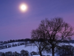 beautiful moon in winter
