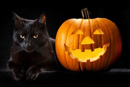 Halloween Black Cat Cats Animals Background Wallpapers On Desktop Nexus Image 1587187
