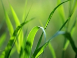 Green Green Grass.