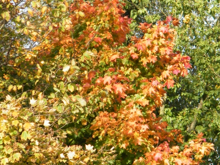 Coloured Tree - forest, autumn, tree, leaves, coloured