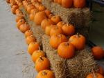 Lotsa Pumpkins