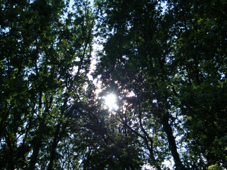 Sun between forest - forest, sun, trees, green