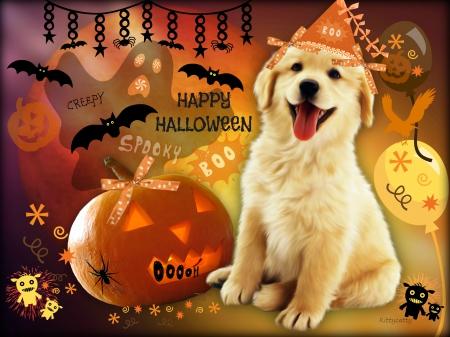 cute halloween puppy dogs animals background