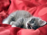 Cute Kitten Full HD