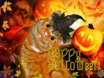 ♥ ☻☻☻ Happy Halloween Cat ☻☻☻ ♥