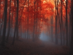 red forrest mist