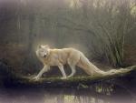 ~Beautiful White Wolf~