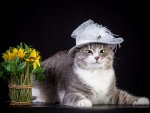 *** Cat with flowers ***