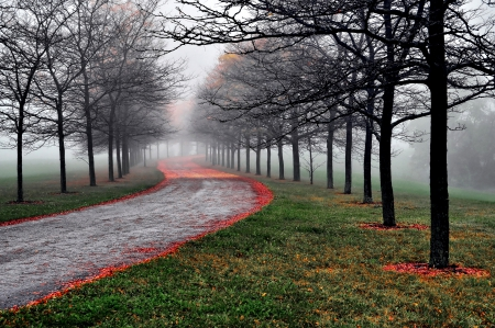 Autumn - forest, fall, autumn, foggy, grass, autumn leaves, fog, mist, leaves, splendor, autumn colors, autumn splendor, nature, misty, road