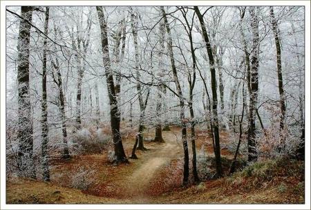 Frosty Woods - Winter & Nature Background Wallpapers on Desktop Nexus  (Image 1594465)