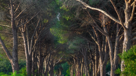 tree lined road in tuscany italy - lines, trees, toad, signs
