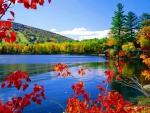 Moose pond in autumn
