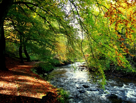 Autumn - forest, fall, autumn, woods, autumn leaves, trees, water, autumn splendor, nature, river, landscape