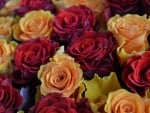 ♥Beautiful bunch of roses♥