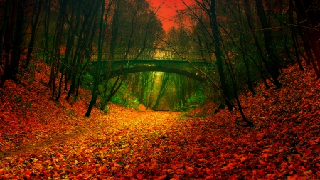 Autumn - forest, rocks, bridge, dark, beautiful, sunset, trees, trees     lake