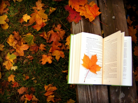 Book and autumn leaves - pretty, colorful, fall, autumn, lovely, pages, falling, book, beautiful, foliage, leaves, nice, season