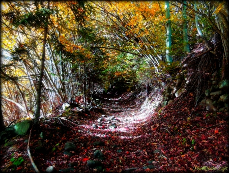 Autumn Walk - forest, fall, yellow red, autumn, colourful, forest path, beautiful, discovery, herbst, path, trail, way