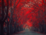 fantastic red treed lined road