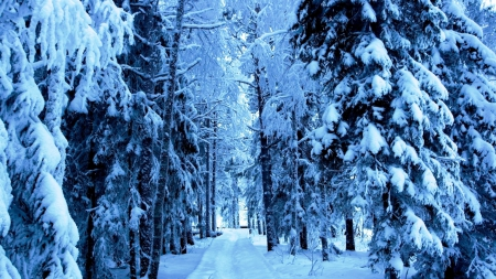 Winter Has Arrived - Path, Trees, Snow, Winter