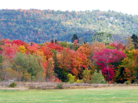 Fall colours - nature, forests