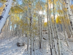wonderful aspen forest in mcclure pass colorado