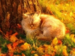 Autumn Nap
