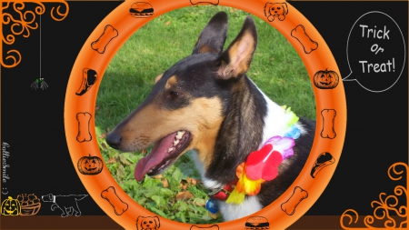 Trick or Treat Katie: A Dogs Halloween - border, costume, frame, jack o lantern, Kati, hamburger, spider, dog buiscut, canine, pumpkin, canines, puppy, chop, Ha11oween, lei, border1ine, Trick or Treat, collie, tricolor