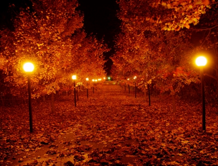 Pretty Autumn Night Other Nature Background Wallpapers On Desktop Nexus Image 1601873