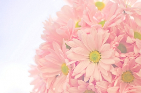 Soft pink flowers nature background wallpapers on desktop nexus soft pink flowers nature gerberas soft mightylinksfo