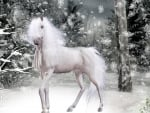 Magical Winter Horse