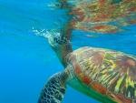 Ocean Marine Turtle
