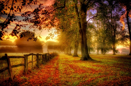 Misty autumn morning - fence, forest, fall, autumn, lovely, falling, colors, beautiful, trees, sky, foliage, path, misty, morning, road, branches